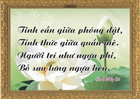 loi-phat-day110