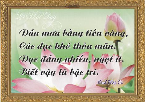 loi-phat-day115