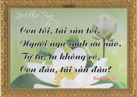 loi-phat-day116