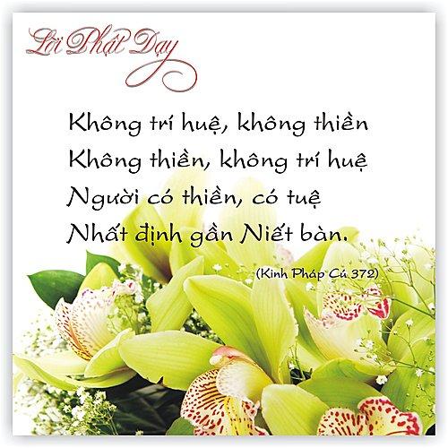loi-phat-day37