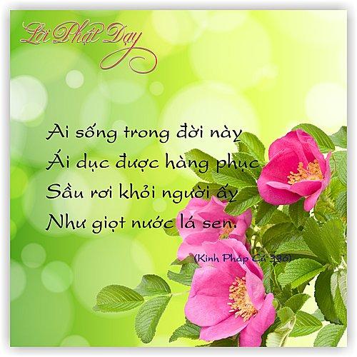 loi-phat-day39
