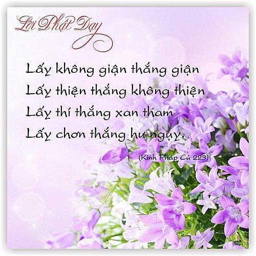 loi-phat-day44