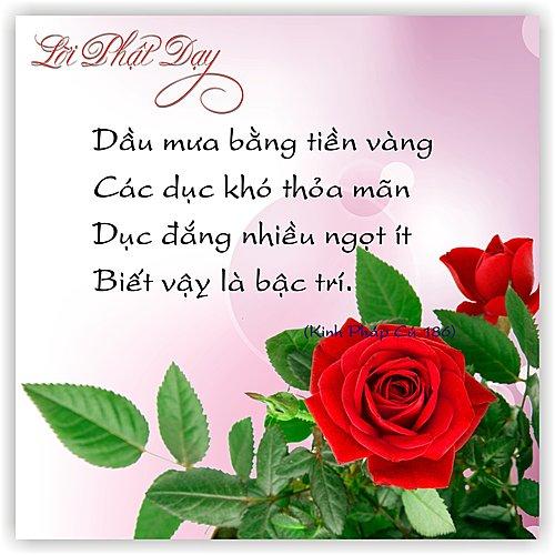 loi-phat-day48