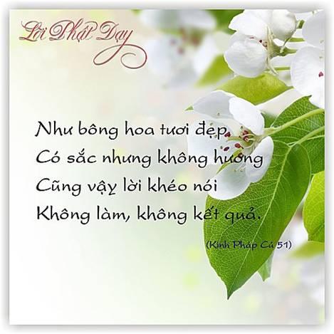 loi-phat-day49