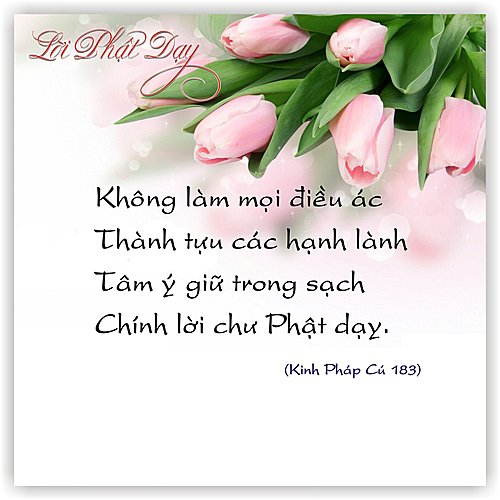 loi-phat-day50