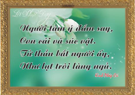 loi-phat-day6