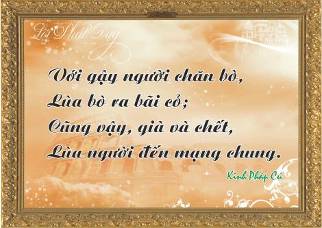 loi-phat-day65