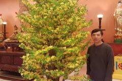 Mung Xuan Dinh Dau29
