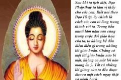 loi-phat-day52