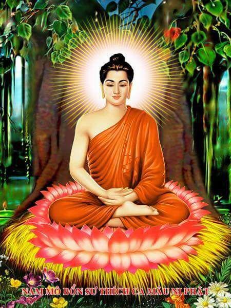 LHĐT – Ngày Vía Bổn Sư Thích Ca Mâu Ni Phật Thành Đạo